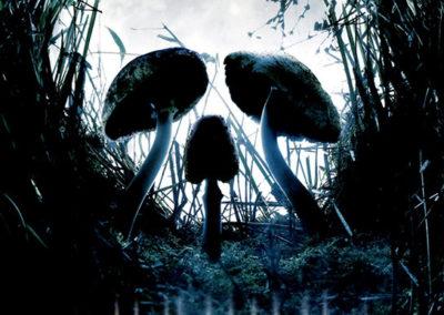 Shrooms, affiche de film