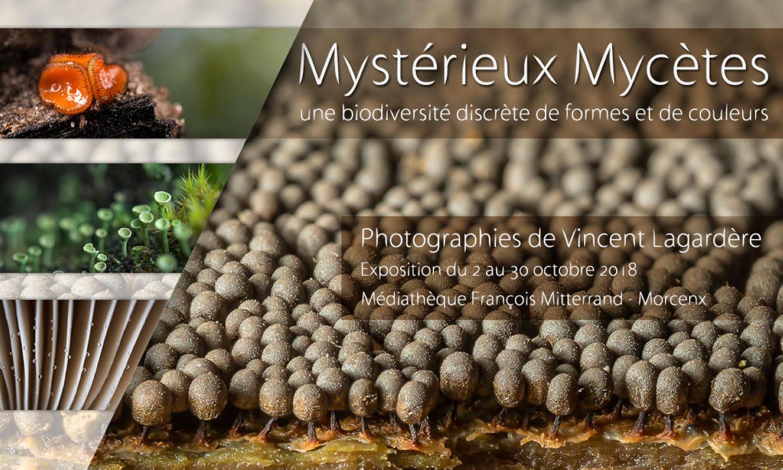 Mystérieux Mycètes, Visuel pour le site de Morcenx (Octobre 2018)