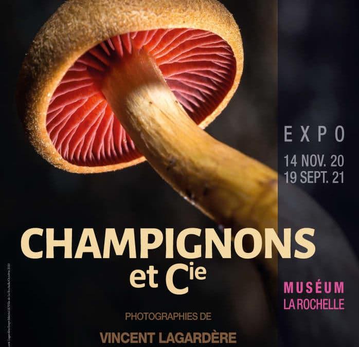 Nouvelle Exposition au muséum de La Rochelle